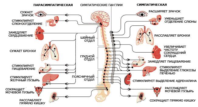 chto-takoe-vsd-simptomy-i-lechenie