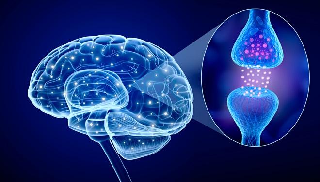 retseptory-mozga