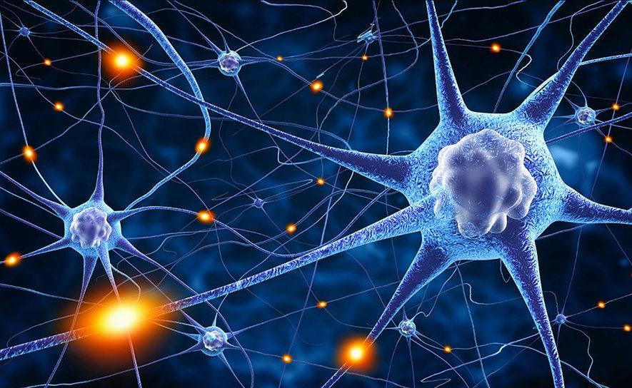 neirony