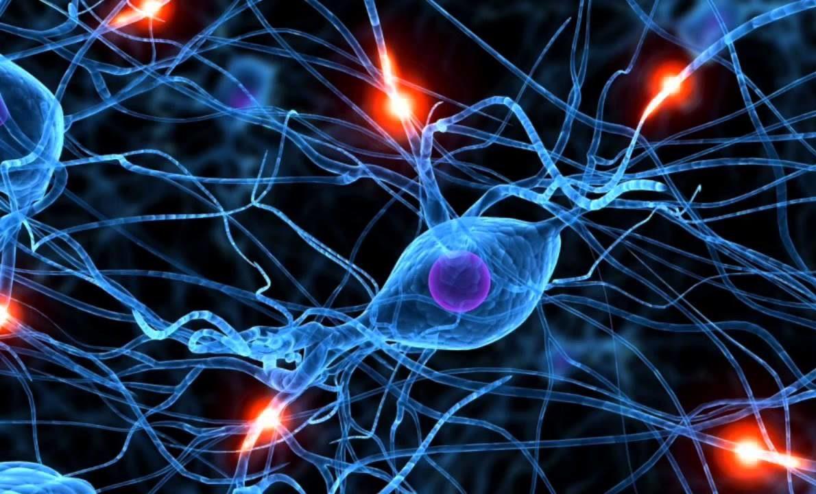 neironnye-svyazi-mozga
