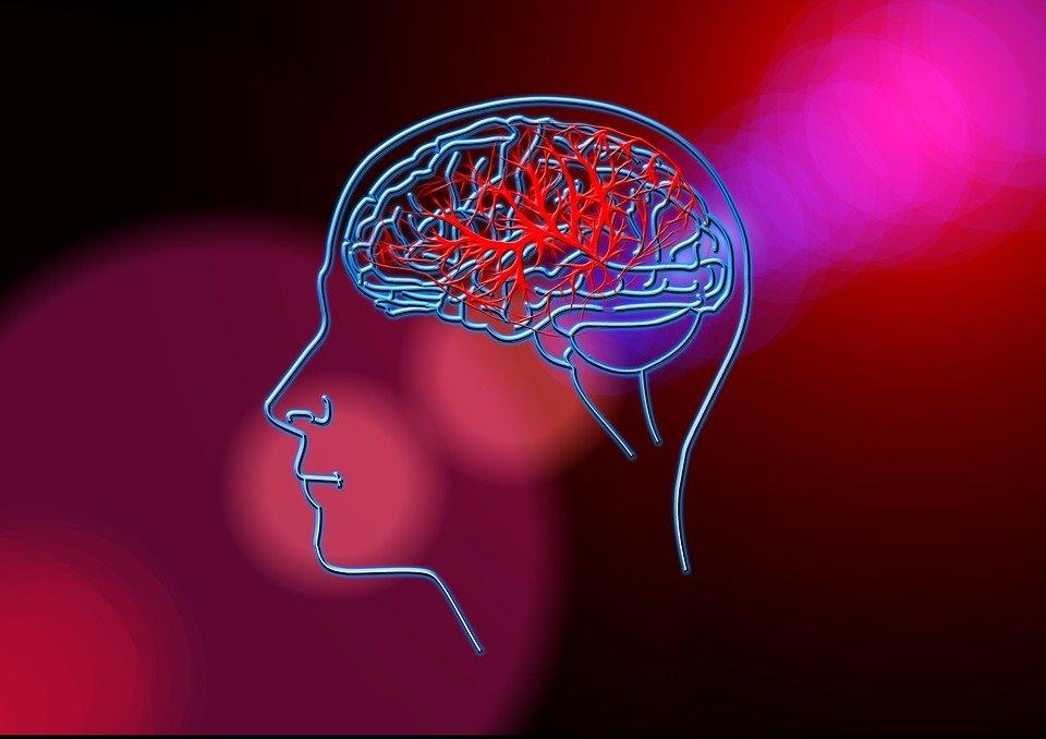 mozg-sosudy
