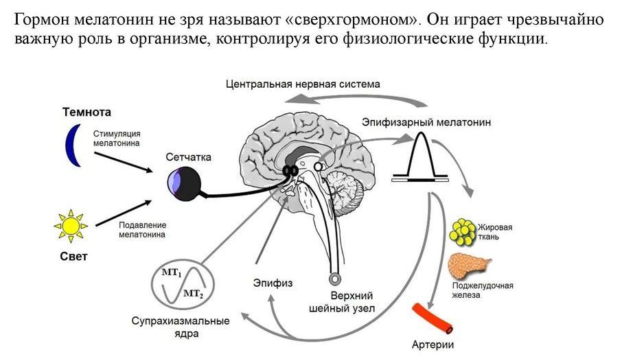gormon-melatonin